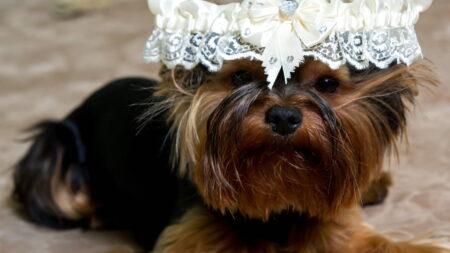 Ubranie dla psa na wyjątkowe okazje