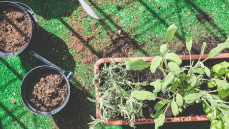 Praca przy roślinach a wpływ na nasze zdrowe?